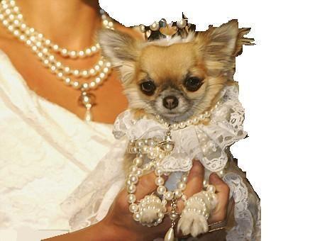 I cani di taglia piccola sono cani di taglia piccola non for Nomi per cagnolini di piccola taglia